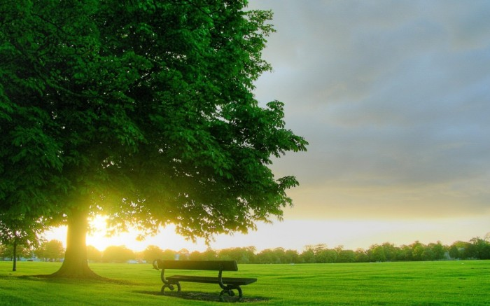 amazing-nature-garden-view-wallpaper