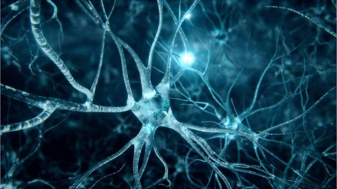 neurogenesis-intellect