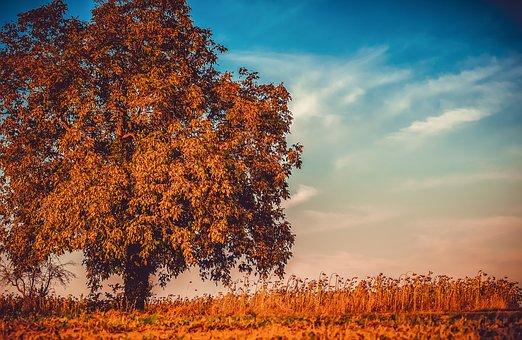 walnut-3759573__340